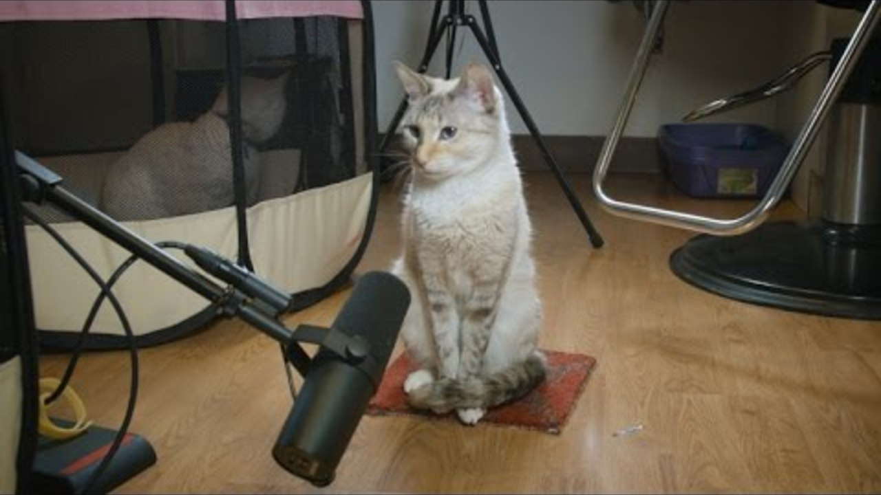 NOLA The Cat Performs John Cage's 4'33